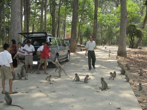Feedin monkeys by hand in Don Chao Poo