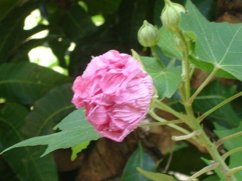 Phana garden 2009010