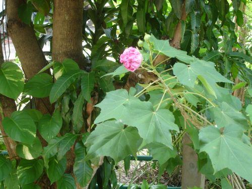 Phana garden 2009011