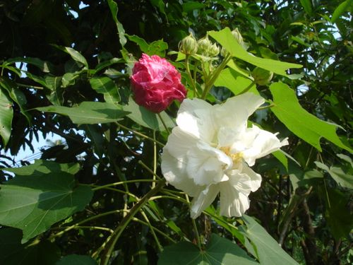 Phana garden 2009012