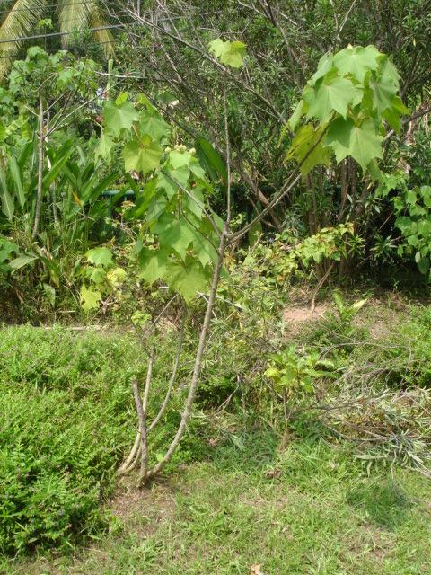 Phana garden 2009006