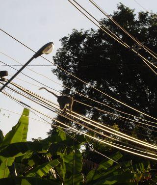 Monkey on wire