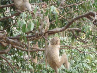 Monkey colony