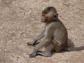 DCP monkeys010