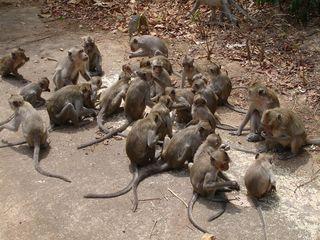 DCP monkeys011