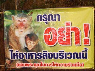 Monkey Colony003