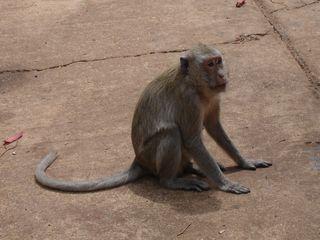 DCP monkeys013